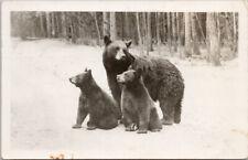 Black Bears Yellowstone Park Two Bear Cubs Haynes #39187 RPPC Postcard G7