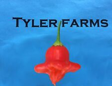 15+ Bishop's Crown Pepper Seeds (organic chile, chili) (Uba Tuba)