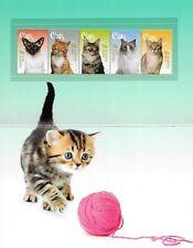 Australia 2015 Australien SP Katze Cat Gato Fauna