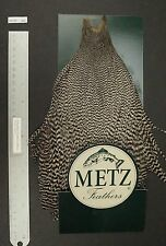 Metz #3 Grizzly Genetic Rooster Neck Dry Fly Rooster Cape Lot-SF 366