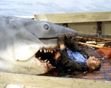 Jaws 1975 Movie Great White Shark 8X10 Photo Reprint