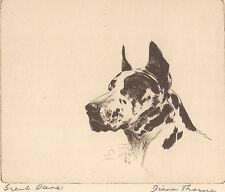 "DIANA THORNE'S  ""GREAT DANE"" Vintage 1935 Dog Artwork Bookplate Print"