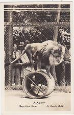 RPPC,El Monte,California,Gay's Lion Farm,Aladdin,San Gabriel Valley,c.1945-50