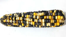 Corn Purple Bumble Bee - A Beautiful & Stunning Purple Black-Yellow Corn Variety