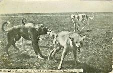 Garden City KS The End of a Coyote 1915