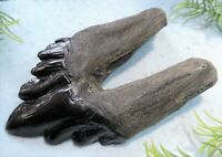 4 INCH LONG ARCHAEOCETE EXTINCT WHALE TOOTH REPLICA FOSSIL RELIC TEETH LARGE NEW