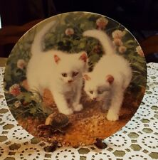 Knowles ♡ A Chance Meeting White American Shorthairs ♡ Amy Brackenbury Plate
