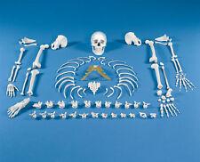 Skelett unmontiert, Knochensammlung, Knochen Sammlung