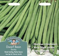 5//20 Seeds Bean Yellow Dwarf Butter Rocquencourt Taste Matchless Slim
