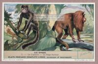 Capuchin And Red Howler Hurleur Monkey Primate Ape Singes 50 Y/O Trade Ad Card