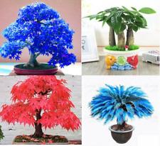 Japanese Rare Unusual Plants and Maple Bonsais Acer tree Seeds Stunning Garden