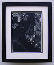 "Fascinating BRASSAI Antique 1930s Photogravure ""The Night Prowlers"" FRAMED COA"