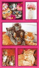 """ROBERT KAUFMAN - CAT CRAZY PANEL - Cute Cats Large Panel CAT CRAZY 24"""" x 44"""""""