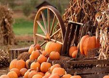 Halloween Pumpkin Vinyl Photography Backdrop Background Studio Props 5x3ft WS04
