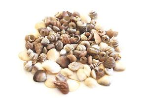 "4 oz Tiny Indian Ocean Shell Mix Mini Shells 1/4"" Seashells Crafts Beach Decor"