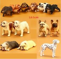 1/6 Scale Dogs Figure American bully pitbull French Bulldog Dalmatian
