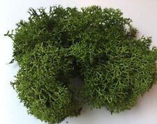 Dark Green Reindeer Moss preserved for lining craft flower hanging basket