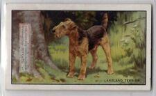 Lakeland Terrier Dog 75+ Y/O Ad Trade Card