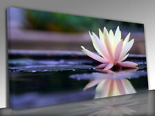 Lotus Flower Panoramic Canvas Wall Art Picture Print