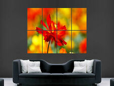 ORANGE RED FLOWER NATURE ART GIANT WALL POSTER  PICTURE PRINT LARGE