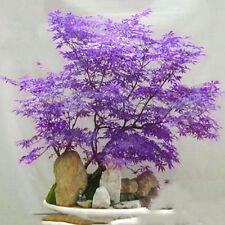 20pcs Japanese Maple Tree Bonsai Seeds Acer Palmatum Atropurpureum Plant Seeds