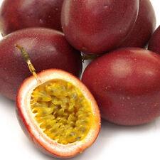 40x Passionsfrucht, Maracuja Seeds Süß Passiflora edulis Neu