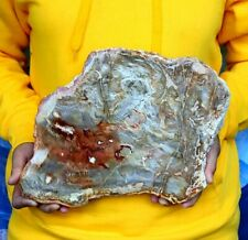 More details for huge petrified wood - spectacular fossil arizonia rainbow wood slab 3000g