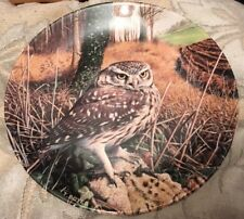 Wedgwood Little Owl By Trevor Boyer Collector's Plate The Majesty Of Owls