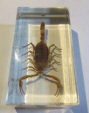 Scorpion dans synthétique