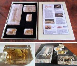 Real insects range crustaceans crab mantis shrimp information  display gift box