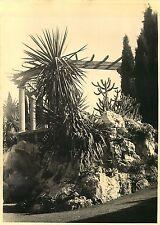 PHOTO 021015 - 1937 - MONACO au jardin exotique