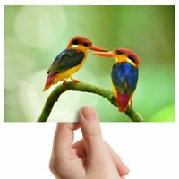 "Photograph 6x4"" - Thailand Oriental Dwarf Kingfisher Bird Art 15x10cm #16198"
