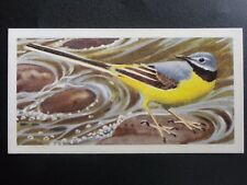 No.21 GREY WAGTAIL - Bird Portraits (with address) by Brooke Bond & Co. 1957