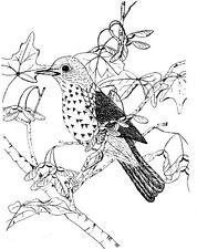 Unmounted Rubber Stamps, Birds, Bird Stamps, Nature, Wild Birds, Wood Thrush