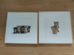 Two Gorgeous Kitten Cat Pictures 31cm x 31cm