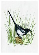 SALE! Magpie, Bird, Print of Original Watercolor Painting, Photo print