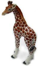 R295B - Northern Rose Miniature - Giraffe Baby Looking Left