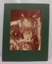 16X20 Original Print Photograph Matted Interior Hawk Signed 1977 Sepia