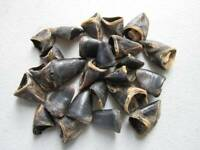20 Deer Dew Claws Jewelry Supplies Native Craft Supplies DIY Beads Taxidermy