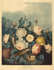 Richard Earlom Reproduction: Roses - Fine Art Print