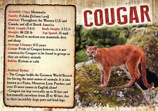 Cougar, Mountain Lion Wildcat North & South America, Animal Information Postcard