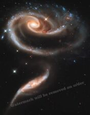 Photograph NASA  Hubble Space - The Rose  (2010)   11x14