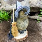 W144A Witch TAXIDERMY curiosities oddities CAYUGA Domestic Baby Duck duckling