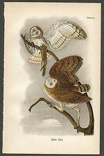 BARN OWL, Vintage 1890 Chromolithograph, Color Print, Antique, 017