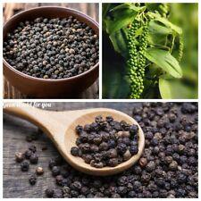 50 Black Pepper Vegetable Seeds Piper nigrum Fragrant Herbs Spice Garden Plants