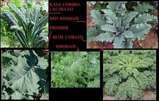 COMBO KALE 50 Seeds each Lacinato Red Russian Blue curled Vates Siberian Premier