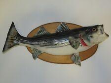 "Striper Bass Fish 26"" Taxidermy Mounted On Wood"