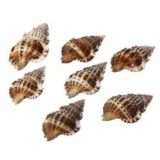 Aquarium Decor Ornament Sea Shells Post-modern Style Natural Seashells Conch New