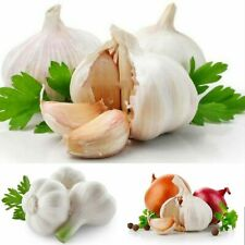100Pcs Garlic Plant Seeds 10 Kinds Alliaceae Onion Vegetables Herb Garden Health