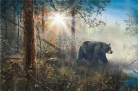 "Shadow in the Mist Bear  Print By Jim Hansel  SN 29"" x 19"""